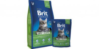 Nejlepší granule pro kočky – recenze a tipy jak vybrat