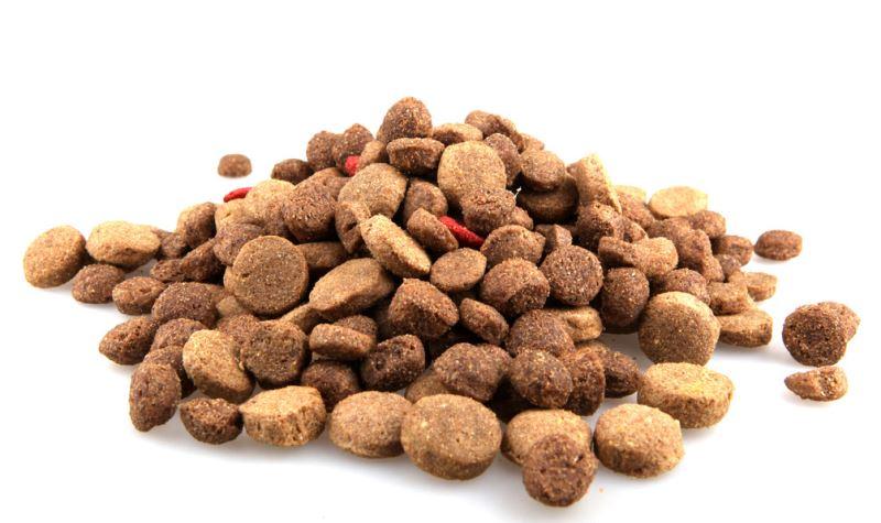 rady jak vybrat granule pro psy