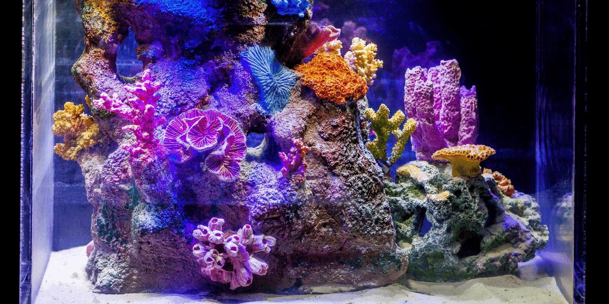 Mořské akvárium set