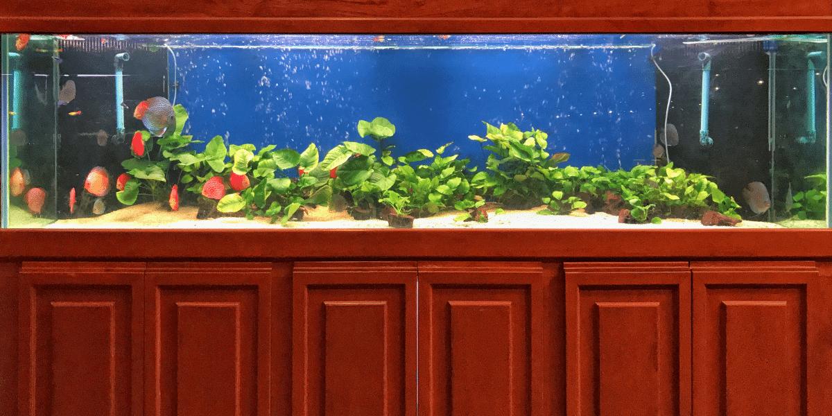 jak vybrat akvárium