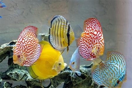Nejlepší akvárium test a recenze akvárií