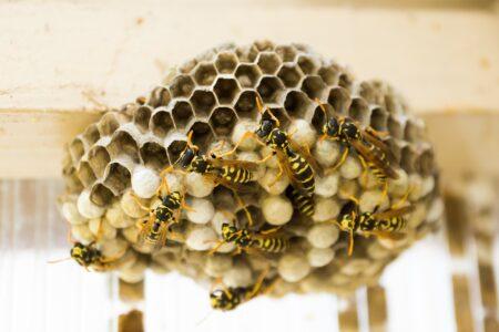 Lapače a odpuzovače hmyzu
